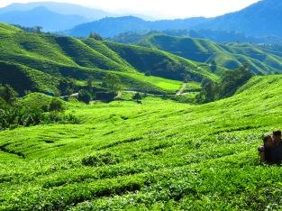 Teeplantage auf 1600 m