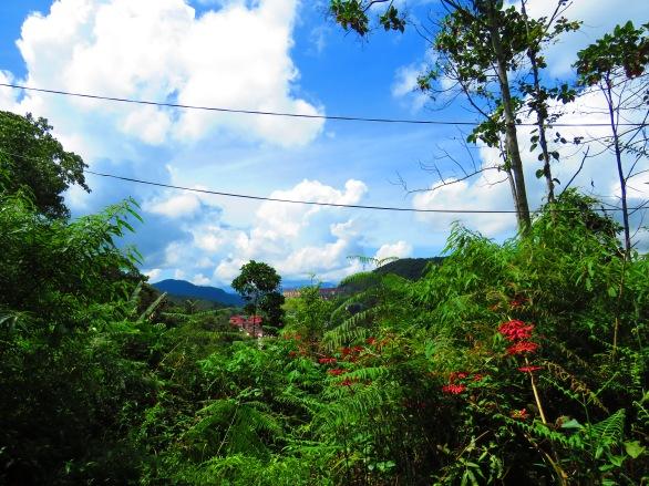 De Native Guesthouse Tanah Rata (26)